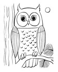 owl colors owls animal coloring pages pictures
