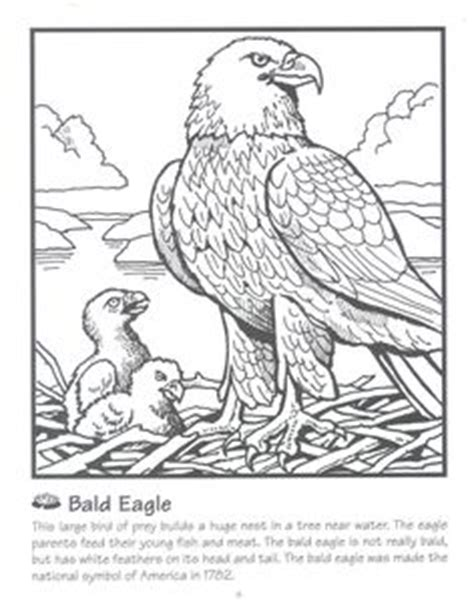 wedge tailed eagle colouring pages sea eagle coloring page wedge tailed eagle coloring page sketch coloring page