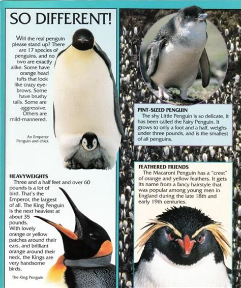 8 Facts On Penguins by 13 Best Penguin Facts Images On Penguin Facts