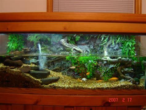 aquarium design for turtles turtle tanks ultraxion discuss page 2