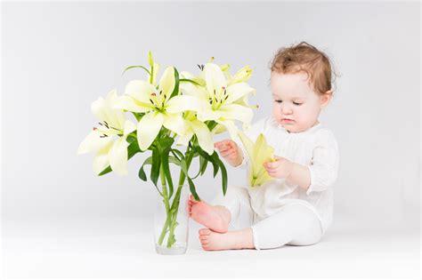 Sind Lilien Giftig 5445 sind lilien giftig tipp lilien sind f r katzen giftig
