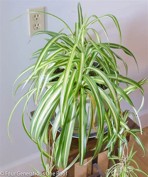 Common Indoor Plants Savingourboys Info