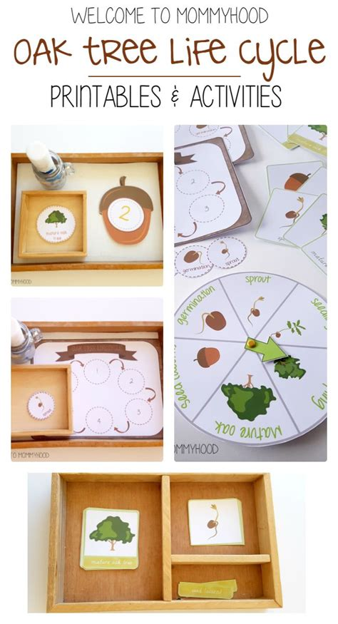 montessori tree printable 17 best images about montessori inspired activities and