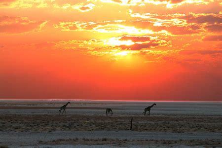 consolato namibia la nambia consolato onorario di namibia in italia