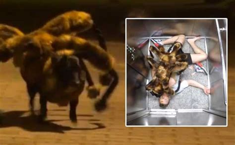 spider costume for dogs mutant spider s terrifying prank goes viral