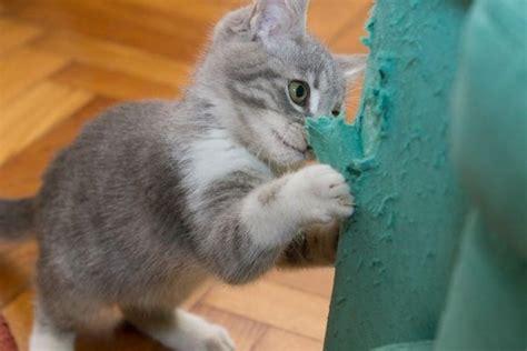 gatti divani pianeta gatti i due tiragraffi che salvano divani e