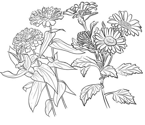 Coloring Page Zinnia by Beautiful Flower Of Zinnia Coloring Page