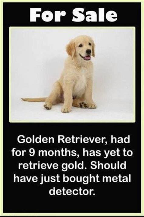 golden retriever jokes golden retriever for sale joke pictures photos and images for