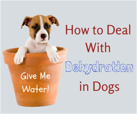 symptoms of dehydration in dogs giardia in dogs symptoms of giaridasis remedies
