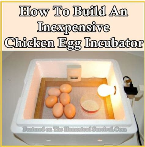 egg incubator ideas  pinterest incubating