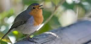 comptage national des oiseaux de jardin comment