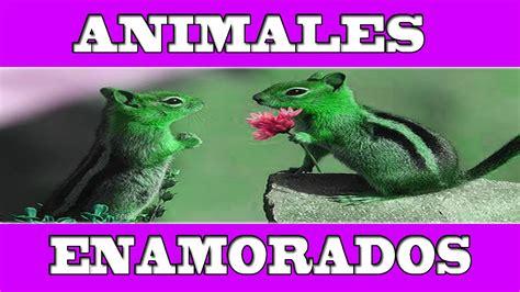 imagenes de animales enamorados animales enamorados tiernas y bonitas im 225 genes de amor y