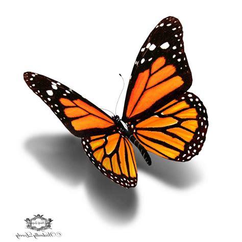 3d butterfly sketch 18 butterfly drawings art ideas