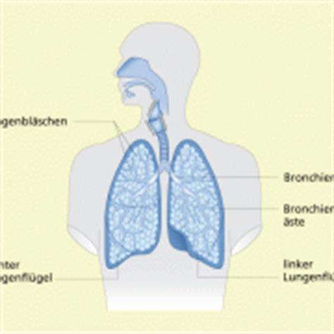 Beschriftung Lunge by Atmungsorgane In Biologie Sch 252 Lerlexikon Lernhelfer