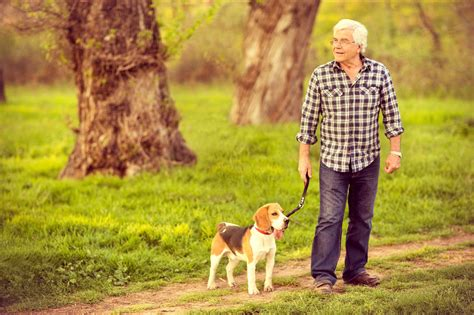 perros con personas 5 buenas razones para tener perro cuando seas mayor