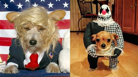 halloween costumes  dogs youtube