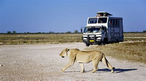 best safari best safari tours and activities for southern and east africa