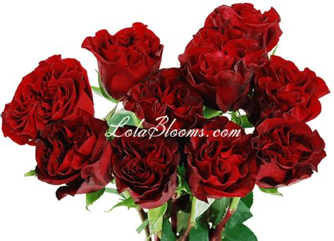 pictures of hearts and roses wholesale wedding roses hearts garden