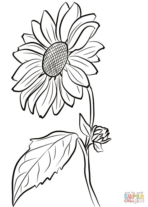 coloring pictures of sunflowers sunflower coloring page free printable coloring pages