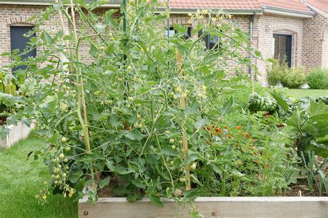Carrã Potager Tomates Carr 233 Potager Tomate Cerise