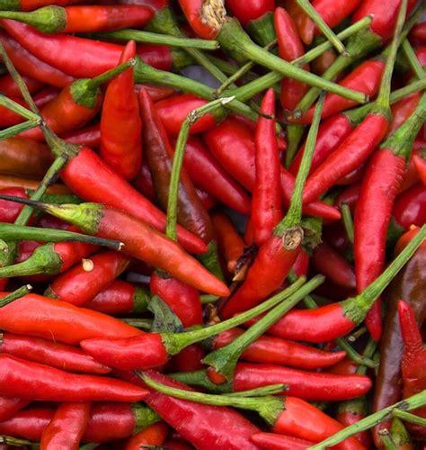 How To Grow Herbs Indoors Chile De Arbol Pepper Seeds