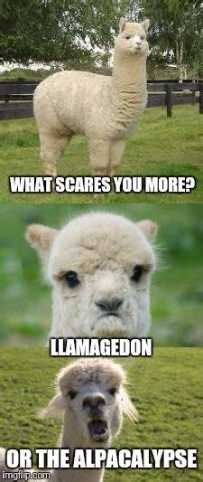 alpaca bad pun imgflip