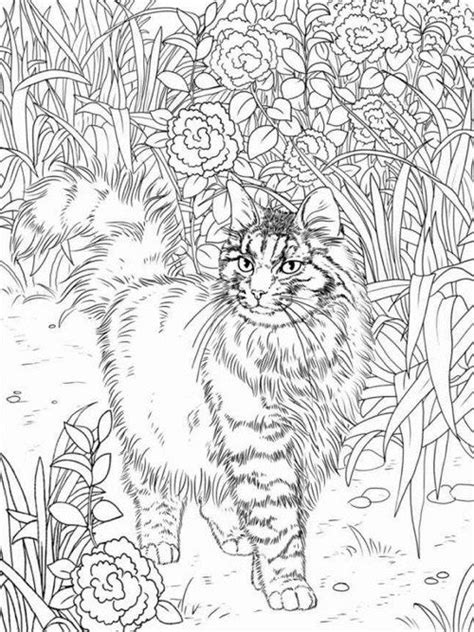 best coloring books for cat lovers coloring coloring