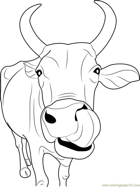 cow coloring page best 25 cow coloring pages ideas on free