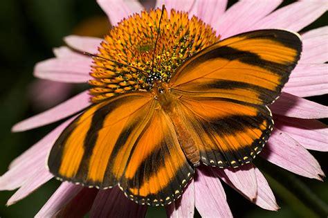 imagenes impresionantes bellas fotos impresionantes de hermosas mariposas fotos de animales