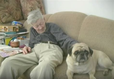 senior pug an elderly and his senior pug aging together what a lovely story