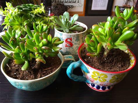 piante grasse da interno piante grasse da appartamento piante appartamento