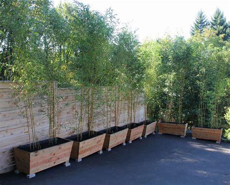 Vasi Per Bamboo by Piante Da Esterno Tante Idee Originali Per Garantire La