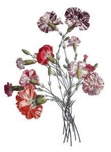 Vintage Flower Drawing - vintage flower drawing free vintage images flower