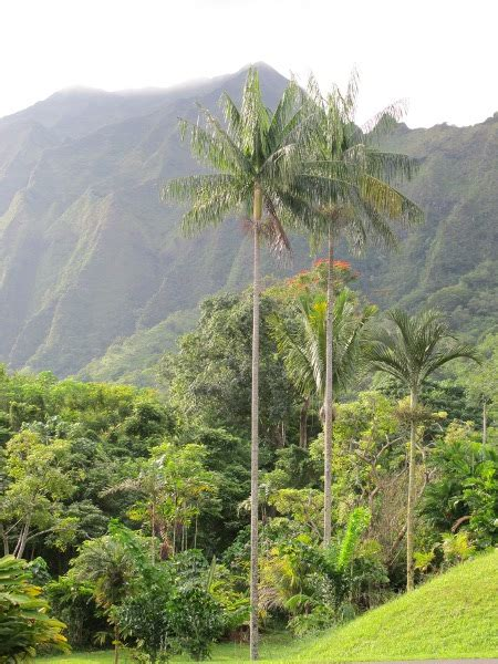 Botanical Gardens Oahu Hawaii Ho Omaluhia Botanical Garden Kaneohe Maps