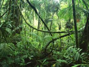 Plants From The Tropical Rainforest - tropical rainforest costa rica plants in nanopics
