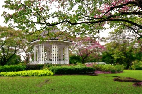 What Is Botanical Garden Singapore Botanic Gardens Oasis Travel In Singapore