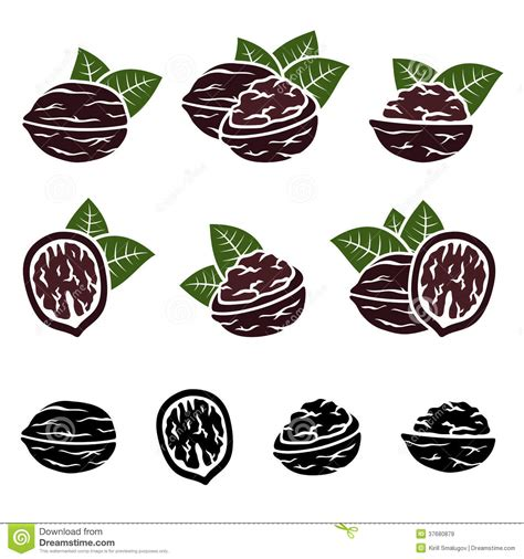 stock photos royalty free images vectors walnut set vector royalty free stock images image 37680879