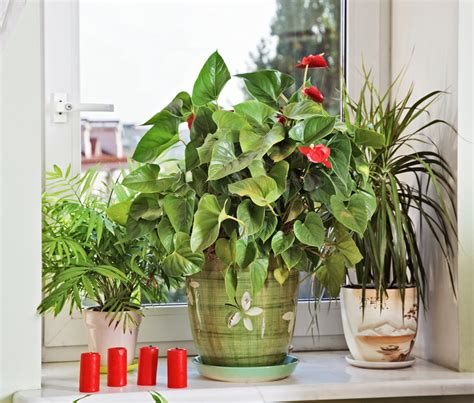 Five Easy Flowers to Grow in Small Spaces   ApartmentGuide.com