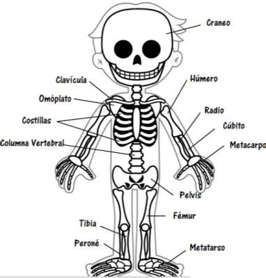 imagenes infantiles huesos el esqueleto humano para ni 241 os con partes yayas kids