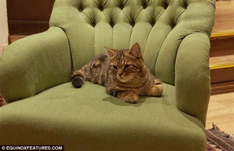cat armchair cafe purrcolater inside london s first cat cafe as bizarre fad for serving hot drinks