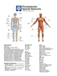 View parts of the body in english and spanish human anatomy