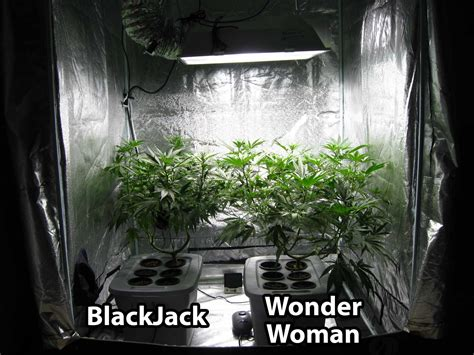hydroponic grow journal  oz harvest grow