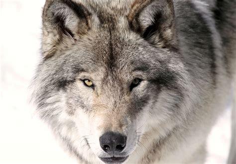 regarder teen spirit regarder streaming vf en france teen wolf en streaming dpstream