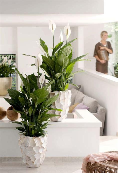 Dekorative Pflanzen F Rs Wohnzimmer 4943 by Pflanzen Deko Wohnzimmer