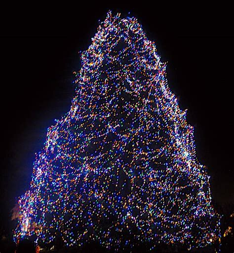 don t miss toledo zoo s lights before christmas a2withkids