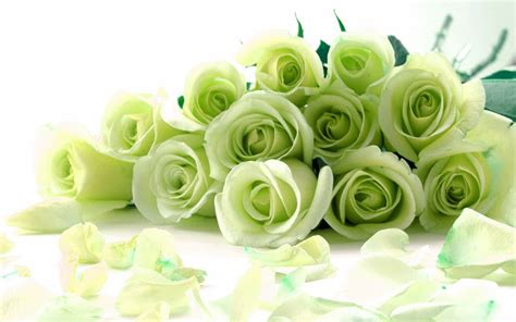 green rose themes nth green roses chrome web store