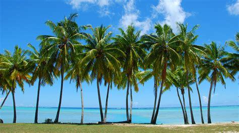 tropical palm tree wallpaper wallpapersafari