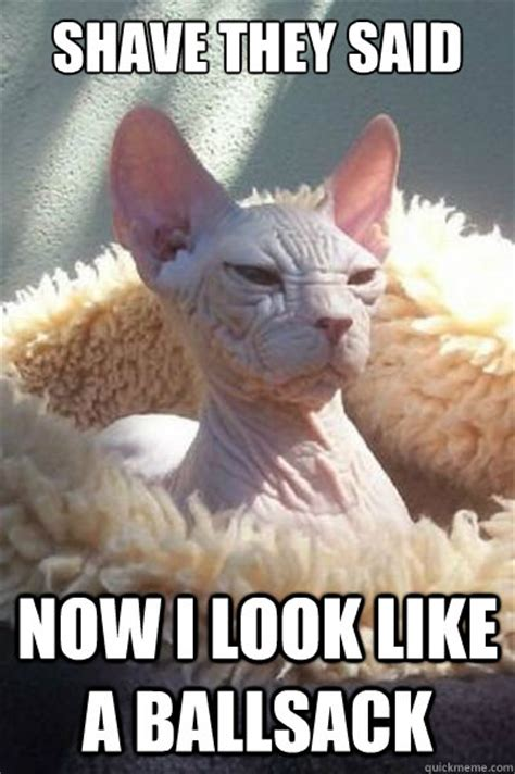 Shaved Cat Meme - shave they said now i look like a ballsack misc quickmeme