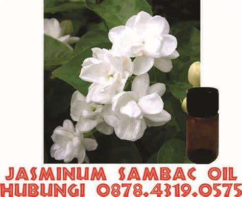 Minyak Atsiri Bunga Melati minyak atsiri bunga melati hub 0878 4319 0575 jual