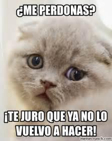Meme Pictures - gato triste
